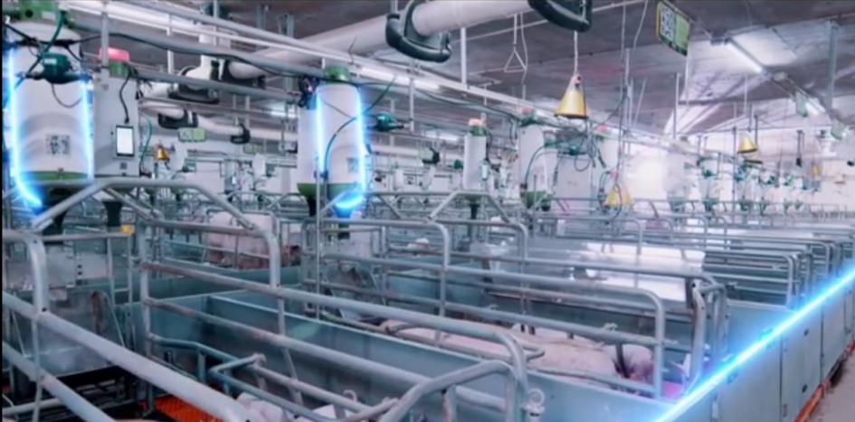 施亮:未来的养猪产业竞争在食品端