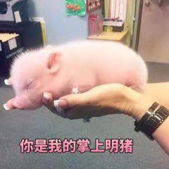 让母猪多生少死!这份七夕礼物养猪人必备