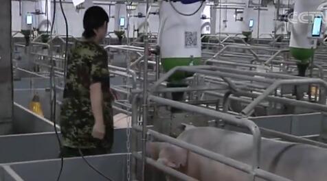 猪病复杂、猪价低迷!扬翔是怎么做降本增效的?